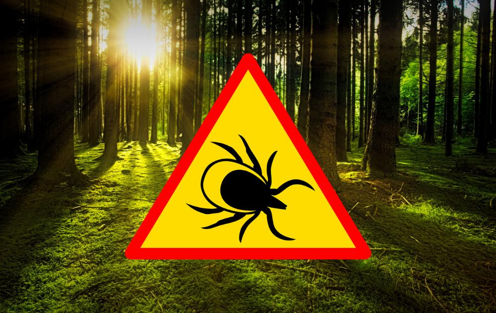 Zabezpiecz się przed insektami!